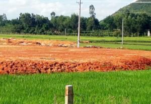 Chuyển mục đích sử dụng đất trồng lúa.